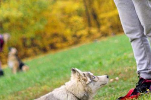 adiestrar a tu cachorro facil
